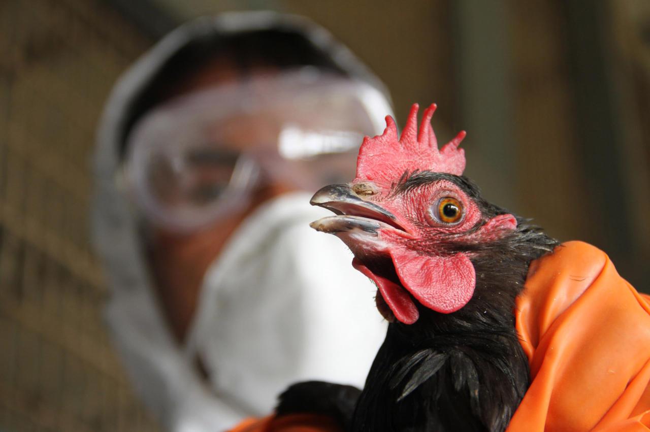 ВПодмосковье зафиксировано уже десять очагов птичьего гриппа